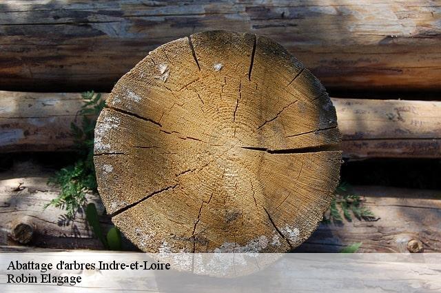 abattage arbre 37